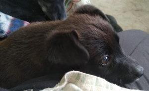 Puppolo cucciolo di 3 mesi