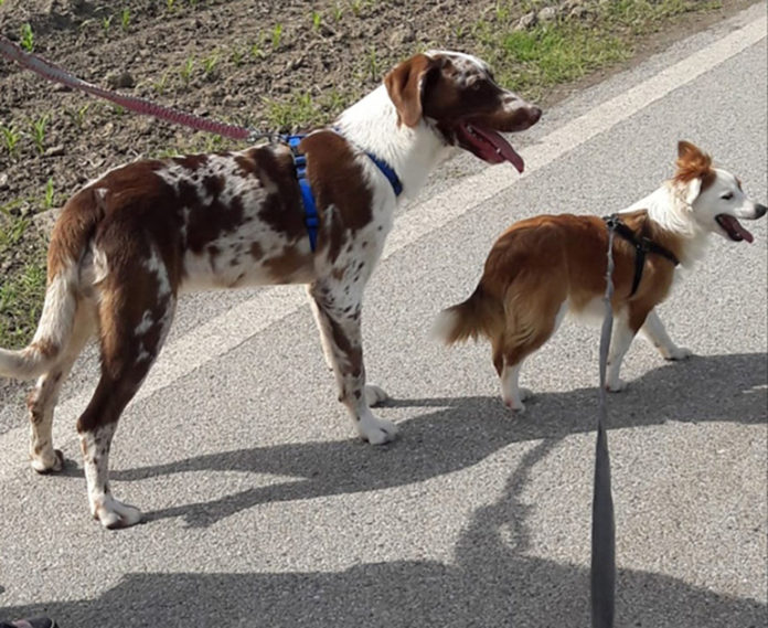 Reibow e Star cani maltrattati