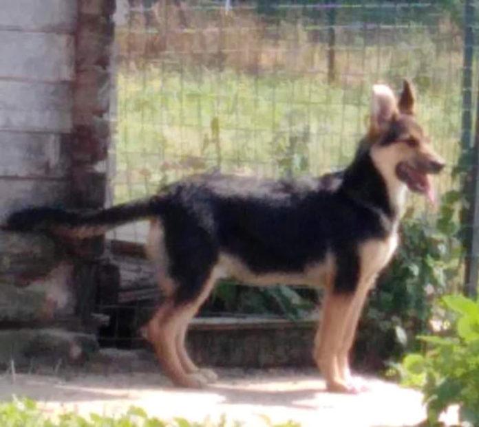 Puppola Gonga