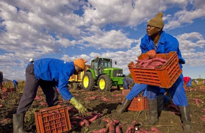 Migranti Lavoratori Stagionali
