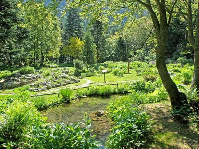 Valderia giardino botanico