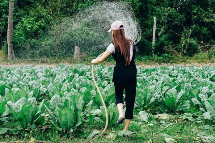 Agricoltura Donna
