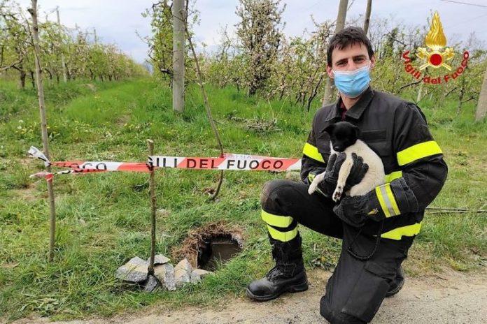 Vigili del fuoco salvano cane a Bagnolo Piemonte