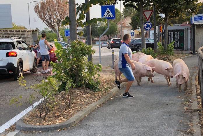 incidente all'incrocio di via Cuneo