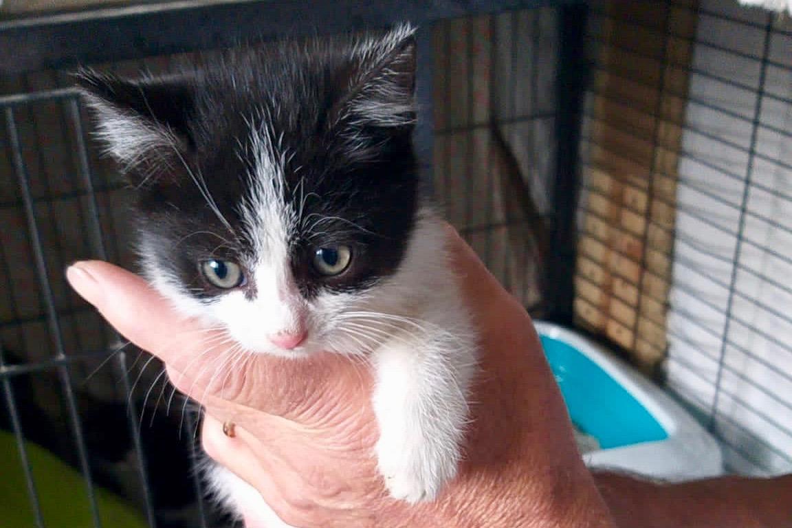 Uno dei gattini salvati in via Roma a Fossano