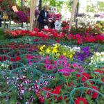 fiori fiorai fioristi